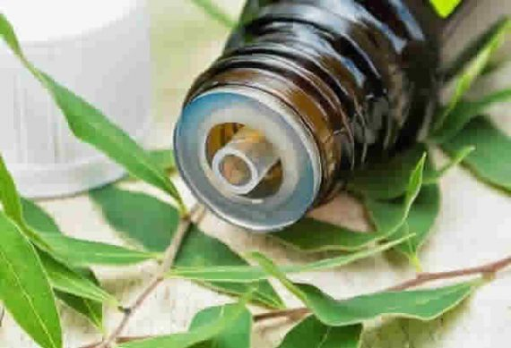 Tinh dầu tràm gió thiên nhiên nguyên chất